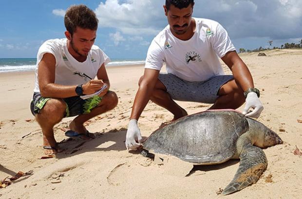 Encalhe de tartarugas marinhas: uma realidade nas praias do Nordeste