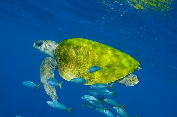 Novo livro sobre o Tamar e as tartarugas marinhas