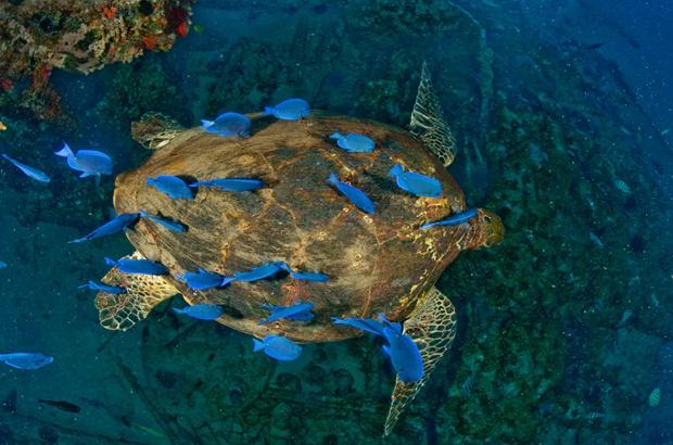 TAMAR destaca papel ecológico das tartarugas marinhas no Mês dos Oceanos