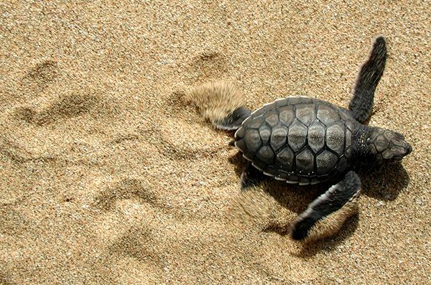 40 milhões de vidas nas praias brasileiras