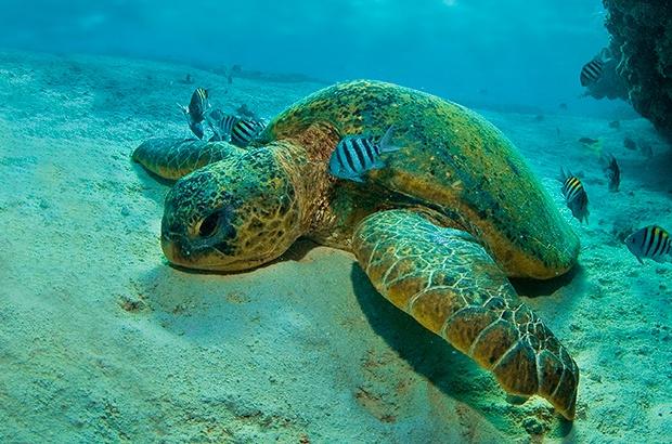 Dia mundial do oceano: Nosso planeta azul