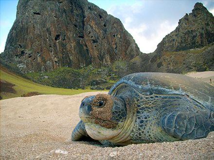 Termina temporada reprodutiva nas ilhas de Fernando de Noronha e Trindade