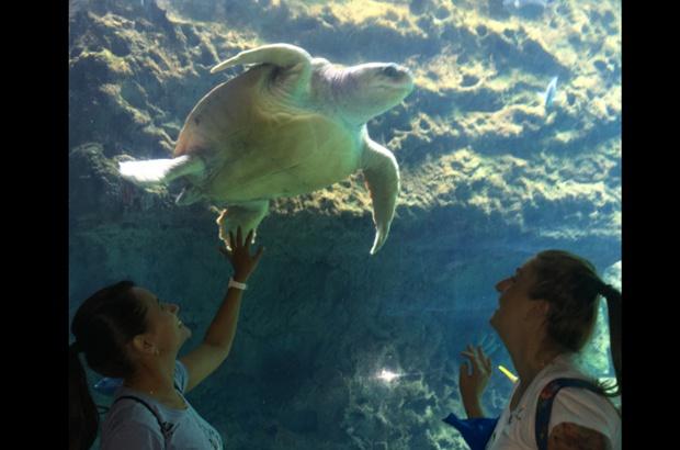 Tamar faz visita técnica ao SeaWorld Parks & Entertainment na Flórida